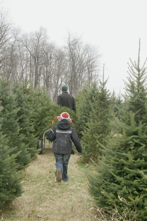 tree hunting / a thousand threads